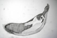 Banane II (Bleistift auf Papier, 59,4 x 42 cm)