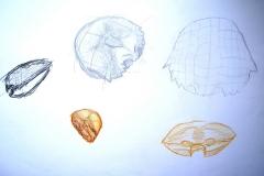 Skizzen (Versch. Techniken auf Papier, 59,4 x 42 cm)